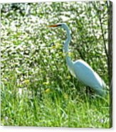Egret In Flowers Acrylic Print