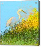 Egret In The Lake Shallows Acrylic Print