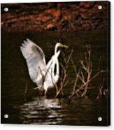 Egret Ix Acrylic Print by Gary Adkins