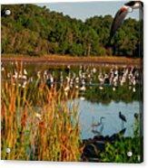 Egret Lake Acrylic Print