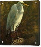 Egret On Branch Acrylic Print