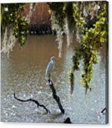 Egret On Stump Acrylic Print