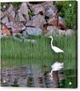 Egret On The Danvers River Acrylic Print
