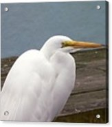 Egret On The Dock Acrylic Print