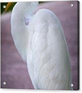 Egret Profile Acrylic Print
