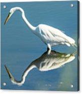 Egret Reflecting Acrylic Print