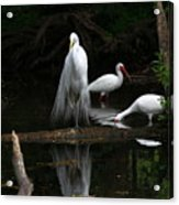 Egret Reflection Acrylic Print