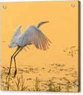 Egret Take Off 3 Acrylic Print