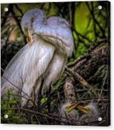 Egrets - 3399 Acrylic Print