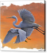 Egrets Great And Snowy Acrylic Print