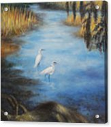Egrets On The Ashley At Charles Towne Landing Acrylic Print by Pamela Poole