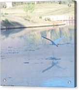 Egrets Reflection Acrylic Print