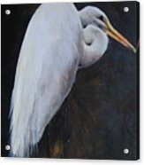 Egrets Series Three Acrylic Print