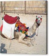 Egypt - Camel Acrylic Print
