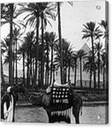 Egypt: Village Acrylic Print