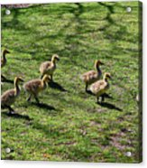 Eight Is Enough Acrylic Print