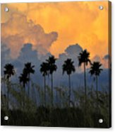 Eight Palms Acrylic Print