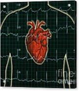 Ekg And Heart Over Torso Acrylic Print