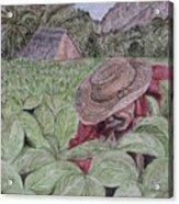 El Campo De Tabaco Acrylic Print
