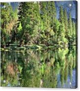 El Capitan Over The Merced River - Yosemite Valley Acrylic Print