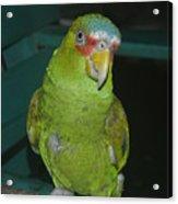 El Loro Verde Acrylic Print