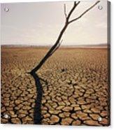 El Mirage Snag Acrylic Print by Larry Dale Gordon - Printscapes