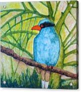 El Pajaro Del Agua Azul  Acrylic Print