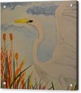 Elana - Egret Acrylic Print