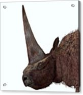Elasmotherium Head Acrylic Print