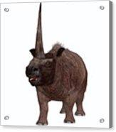 Elasmotherium On White Acrylic Print