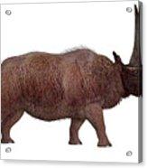 Elasmotherium Side Profile Acrylic Print