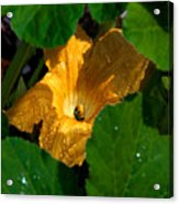 Eldorado For Bees Acrylic Print