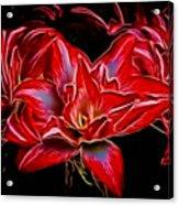 Electric Amaryillis Acrylic Print