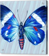 Electric Blue Moth Acrylic Print