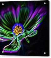 Electric Daisy Acrylic Print