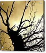 Electric Tree Black And Gold Acrylic Print