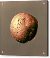 Electrum Nugget, C1100 B.c Acrylic Print