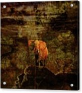 Elefant King Acrylic Print