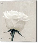 Elegance In White Acrylic Print by Wim Lanclus