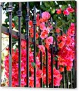 Elegant Fence Acrylic Print