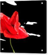 Elegant Poppy Acrylic Print