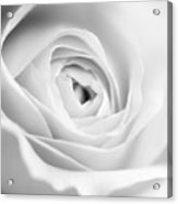 Elegant Rose Rendered In Black And White Square Acrylic Print