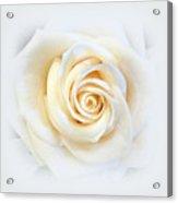Elegant Softness Acrylic Print