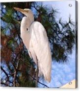 Elegant White Crane Acrylic Print