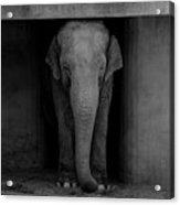 Elephant #2 Acrylic Print