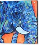 Elephant# 6 Acrylic Print