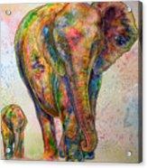 Elephant And Calf Acrylic Print