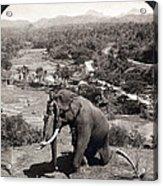 Elephant And Keeper, 1902 Acrylic Print