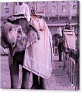 Elephant At Amber Fort Acrylic Print