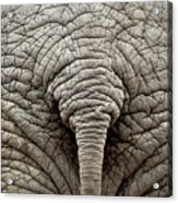 Elephant But Acrylic Print by images by Luis Otavio Machado